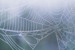 Spiderweb Stock Image