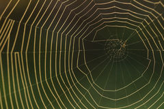 A spiderweb in early morning light Stock Photos