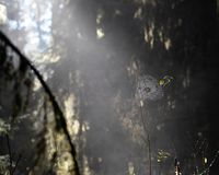 Spiderweb em um ramo de árvore imagem de stock royalty free