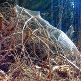 Spiderweb en el bosque Fotografía de archivo libre de regalías