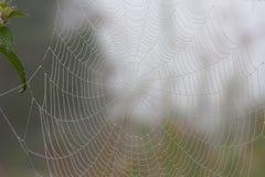 Spiderweb en el bosque de la mañana Imagen de archivo libre de regalías