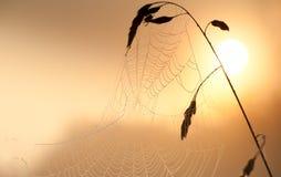 Spiderweb en el cierre de la salida del sol para arriba Foto de archivo libre de regalías