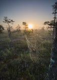 Spiderweb en la correhuela Foto de archivo libre de regalías