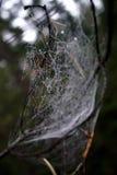 Spiderweb en rocío foto de archivo