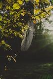 Spiderweb en un árbol Fotos de archivo