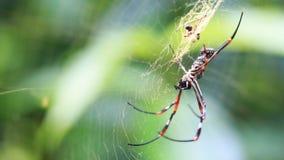 spiderweb för spindel för tät dof-makro grund upp Royaltyfria Bilder