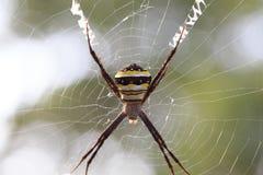 spiderweb för spindel för tät dof-makro grund upp Royaltyfri Bild