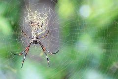 spiderweb för spindel för tät dof-makro grund upp Arkivfoton