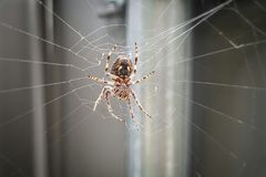 spiderweb för spindel för tät dof-makro grund upp Arkivbild