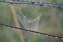 Spiderweb on Fence Royalty Free Stock Photography