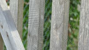 The spiderweb on the fence stock video footage