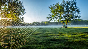 SpiderWeb. In the fog Royalty Free Stock Photos