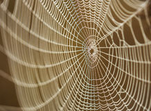 Spiderweb in forest Royalty Free Stock Photos