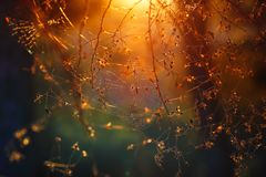 Spiderweb in the forest. Spiderweb between trees in the forest, abstract natural background, amazing magical view, beautiful mild orange sunset light background Royalty Free Stock Images