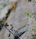 Spiderweb frędzlasty z rosa kroplami Zdjęcia Royalty Free