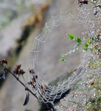 Spiderweb fringed with dew drops Royalty Free Stock Photos