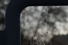The spiderweb and frost in a sunlight Royalty Free Stock Images