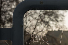 The spiderweb and frost in a sunlight Royalty Free Stock Photography