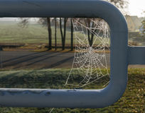 The spiderweb and frost in a sunlight Royalty Free Stock Photos
