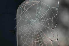 The spiderweb and frost in a sunlight Stock Photo