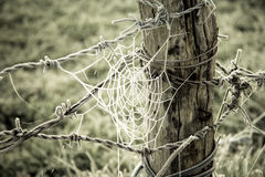 Spiderweb frozen and barbed wire in a wooden trunk. Spiderweb frozen and barbed wire frozen in a wooden trunk on green grass field background Royalty Free Stock Image
