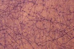 Spiderweb gosta do teste padrão de papel Foto de Stock Royalty Free