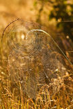 Spiderweb in grass closeup Royalty Free Stock Photography