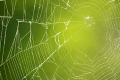 Spiderweb on Green. A closeup of a back lit spider web against a green nature background stock photos
