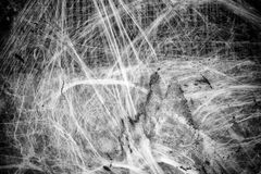 Spiderweb on halloween. Spiderweb on old wall  hallowen, animal and nature festivals Stock Photography