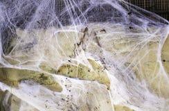Spiderweb on halloween. Spiderweb on old wall  hallowen, animal and nature festivals Stock Photos