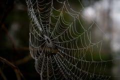 Spiderweb i closeup, kan se vattendroppar arkivbilder