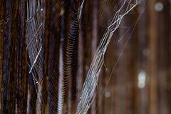 Spiderweb i defensiv korridor i Noerdlingen royaltyfria foton
