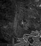 Spiderweb i pająk odbijaliśmy w późnego popołudnia słońcu (błyskowa asysta) Fotografia Royalty Free