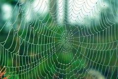 Spiderweb i regndroppar Fotografering för Bildbyråer