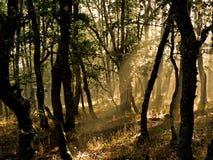 Spiderweb i skogen arkivfoto