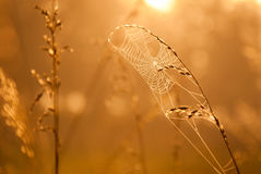 Spiderweb im goldenen nebeligen Sonnenlicht Lizenzfreie Stockfotografie