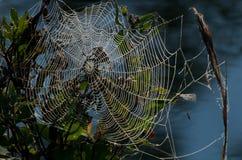 Spiderweb im Morgen Lizenzfreies Stockbild