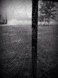 Spiderweb im Regen stockfotos