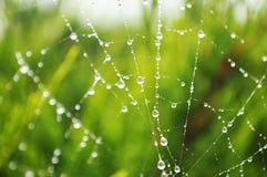 Spiderweb im Regen lizenzfreies stockfoto