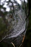 Spiderweb im Tau Stockfoto