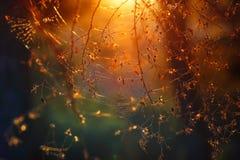 Spiderweb im Wald lizenzfreie stockbilder
