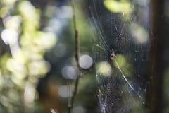 Spiderweb im Wald mit nettem undeutlichem Hintergrund und natürlichem Licht Lizenzfreies Stockfoto