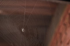 Spiderweb. An interesting spiderweb through the sun light Stock Photography