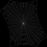 Spiderweb. Isolated on black background. Vector outline illustra Royalty Free Stock Photo