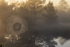 Spiderweb on the lake at sunrise royalty free stock photos