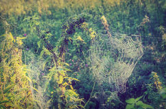 Spiderweb in meadow Royalty Free Stock Photos