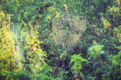 Spiderweb in meadow Stock Photo