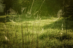 Spiderweb in meadow Royalty Free Stock Photo