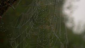 Spiderweb med dagg lager videofilmer