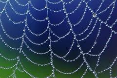 Spiderweb med dagg tappar Arkivfoto